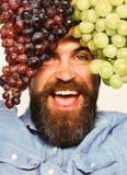 Mann mit Bart hält Bündel der schwarzen und grünen Trauben Lizenzfreies Stockfoto