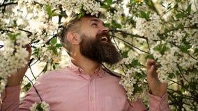 Mann mit Bart und Schnurrbart auf lächelndem Gesicht nahe Kirschbaumblumen Weiches und leichtes Konzept B?rtiger Mann mit stilvol stock video footage