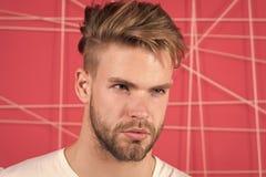 Mann mit Borste auf strengem starkem Gesicht, rosa Hintergrund Männlichkeitskonzept Kerl bärtig und attraktiv mit lizenzfreies stockbild