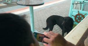 Mann mit dem Handy, der Foto des streunenden Hundes macht stock video footage