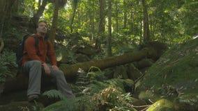 Mann mit dem Rucksack-Rucksack, der Regenwaldholz, grünen Tourismus betrachtend sitzt stock video