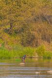 Mann mit greeen baske Fischen in Kumgang-Fluss Stockfotos