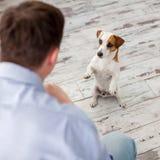 Mann mit Hund zu Hause Stockfotografie