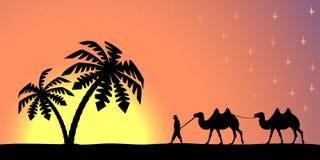 Mann mit Kamelen bei Sonnenuntergang Lizenzfreie Stockbilder