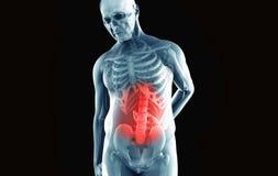 Mann mit niedrigeren Rückenschmerzen Lizenzfreies Stockbild