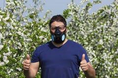 Mann mit Schutzmaske, während Sprühkirsche blüht Lizenzfreies Stockfoto