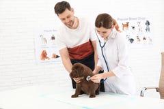 Mann mit seinem Haustierbesuchstierarzt Doc., das Labrador-Welpen überprüft stockbild