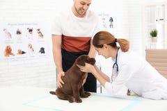 Mann mit seinem Haustierbesuchstierarzt Doc., das Labrador-Welpen ?berpr?ft stockbilder
