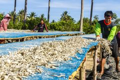 Mann mit trockenen kleinen Fischen Lizenzfreies Stockfoto