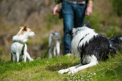 Mann mit verschiedene Hunde Lizenzfreies Stockfoto