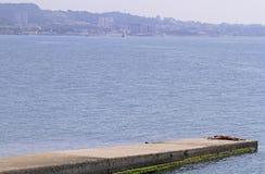 Mann nimmt auf einem Pier in Khosta, Russland ein Sonnenbad Lizenzfreie Stockbilder