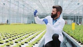 Mann nimmt eine Sonde des Grüns in einem Erlenmeyer-Kolben, der im Gewächshaus steht Landwirtschaftlicher Ingenieur, der herein a stock footage