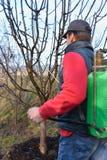 Mann in orchand Sprühbäumen Stockbilder
