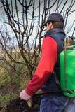 Mann in orchand Sprühbäumen, im Frühjahr Stockbilder