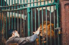 Mann playnig mit Löwe im Käfig Lizenzfreies Stockbild