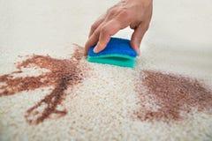 Mann-Reinigungs-Fleck auf Teppich mit Schwamm Lizenzfreie Stockfotografie