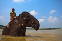 Mann reitet den asiatischen Elefanten, der im Fluss badet Stockfotos