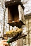 Mann säubert ein Vogelhaus Lizenzfreie Stockbilder