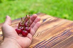 In Mann ` s Hand wenige reife rote Kirschen auf dem hölzernen Hintergrund auf Freilicht Stockfotografie