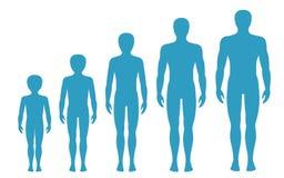 Mann ` s Körperproportionen, die mit Alter ändern Junge ` s Körper-Wachstumsstadien Auch im corel abgehobenen Betrag Alternkonzep Lizenzfreie Stockfotografie