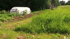 Mann schnitt Gras mit Treibstofftrimmer entlang Garten mit Gewächshaus stock video