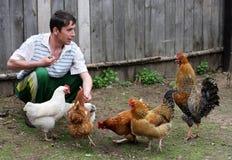 Mann speist Hennen Stockfotos
