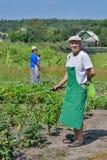 Mann sprüht Anlagen im Garten Lizenzfreie Stockfotos