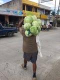 Mann an tragenden Kohlpflanzen der Arbeit über seiner Schulter Stockfotos