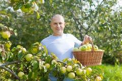 Mann umgeben durch Apfelbäume Stockbild