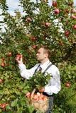 Mann und Apfelbaum. Lizenzfreie Stockbilder