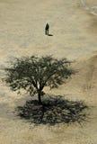 Mann und Baum auf dem Gebiet stockfoto