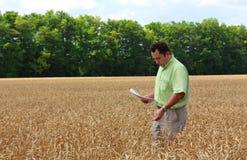 Mann und Feld des Weizens Stockbilder