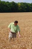 Mann und Feld des Weizens Lizenzfreie Stockfotos