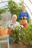 Mann und Frau in der Gemüseanlage Lizenzfreies Stockfoto