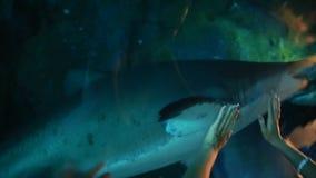 Mann und Frau necken einen Haifisch in einem Aquarium stock video