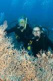 Mann- und Frauenunterwasseratemgerätsturzflug togeather Lizenzfreie Stockfotografie
