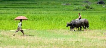 Mann und Junge auf einem Reisfeld in Sapa, Vietnam stockfotos
