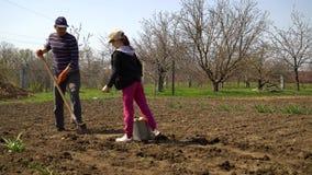 Mann und Mädchen, die Kartoffeln auf Landwirtfeld im Vorfrühling pflanzen stock footage