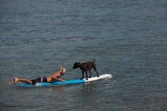 Mann und sein Hund surfen Lizenzfreies Stockbild