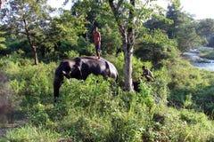 Mann und Tier Original und Bediensteter Elefant mit Mann Lizenzfreies Stockfoto