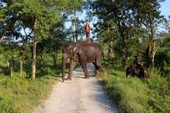 Mann und Tier Original und Bediensteter Elefant mit Mann Stockfotos
