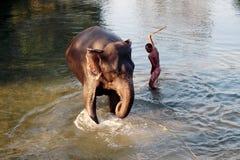 Mann und Tier Original und Bediensteter Elefant mit Mann Lizenzfreie Stockfotografie