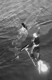 Mann und Weißer Hai Stockfotografie