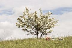 Mann unter einem blühenden Baum Stockfotografie