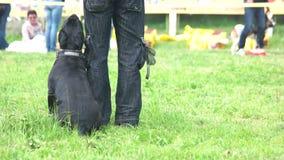 Mann unterrichtet seinen Hund durchführen schnell Befehle stock video