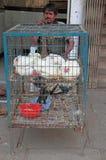 Mann verkauft die lebendigen Hühner, die in Hyderabad, Indien im Freien sind lizenzfreies stockfoto