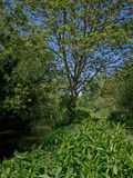 Mann von Natur aus in den Schatten gestellt im Flusslebensraum stockbild