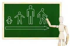 Mann zeichnet Stadien des Menschenlebens auf der grünen Tafel Stockfoto