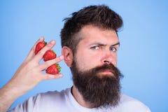 Mannbarthippie-Erdbeerfinger-Blauhintergrund Größtenteils Kohlenhydratsaccharose-Fruchtzuckerglukose kohlenhydrat lizenzfreie stockfotos