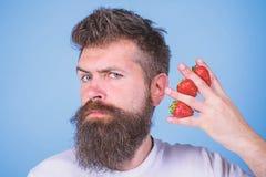 Mannbarthippie-Erdbeerfinger-Blauhintergrund Gr??tenteils Kohlenhydratsaccharose-Fruchtzuckerglukose kohlenhydrat lizenzfreie stockbilder